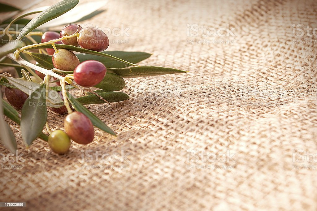 Branch of olives on sack cloth stock photo