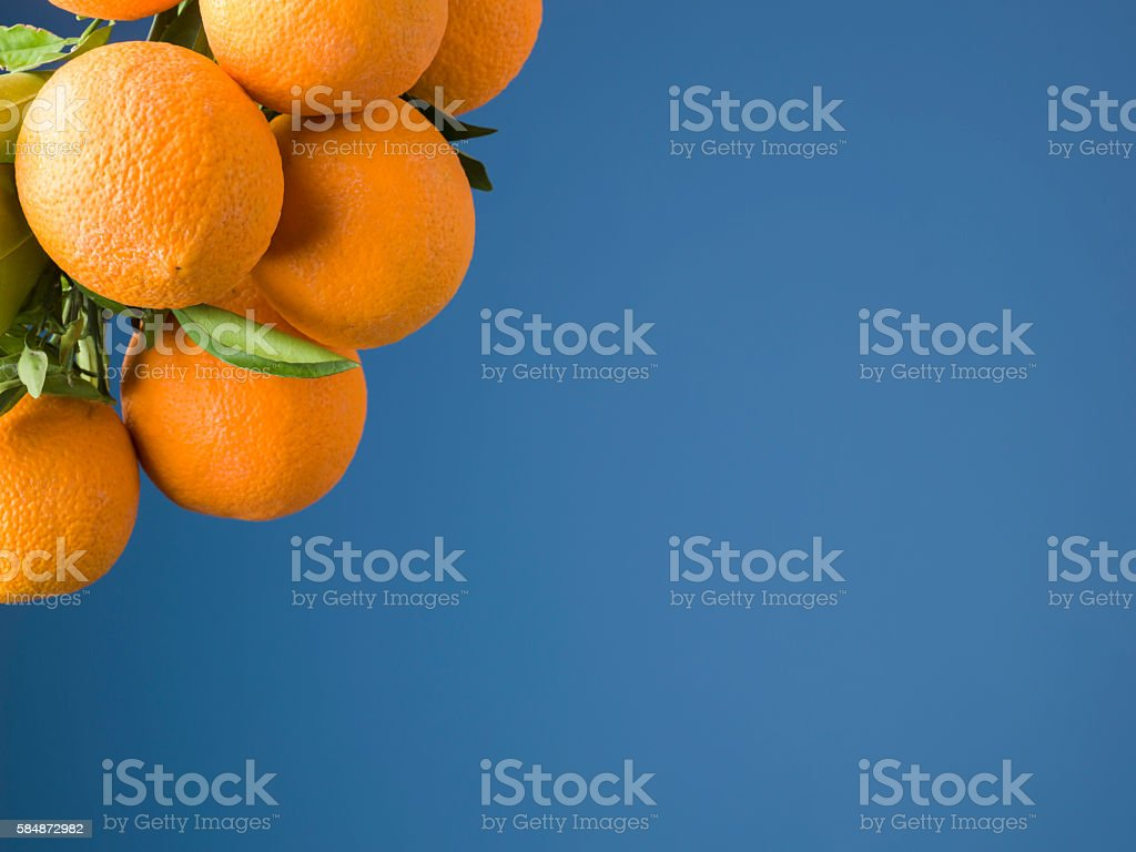 Branch Of Orange Tree On Blue Background stock photo