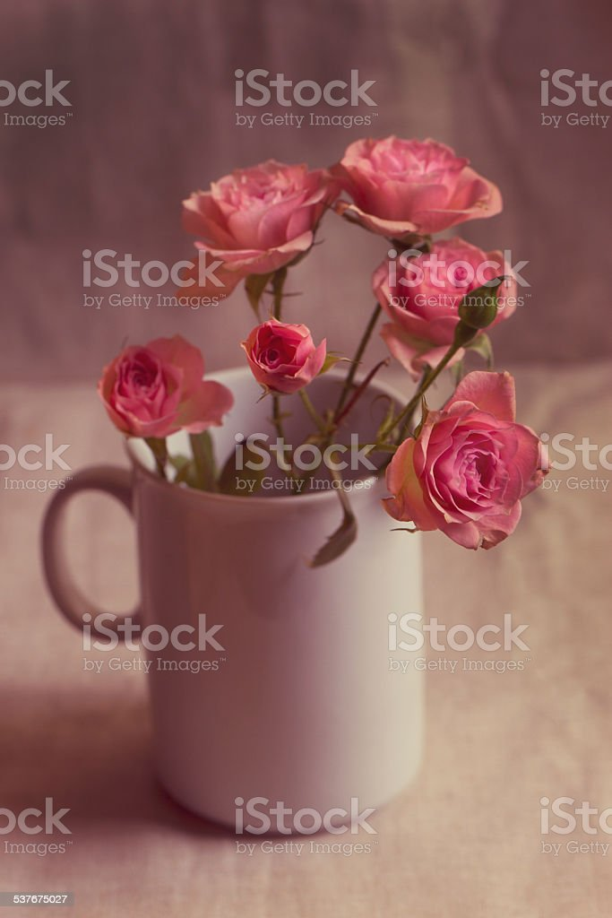 Branch of small vintage red roses stock photo