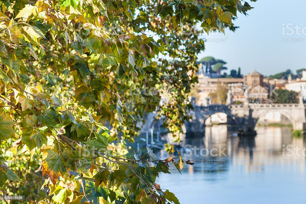 branch of sycamore tree and Tiber River in Rome stock photo