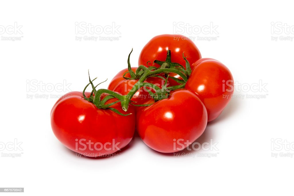 A branch of tomatoes on a white background stock photo