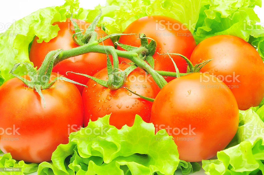 branch of tomatoes over fresh salad leaves royalty-free stock photo