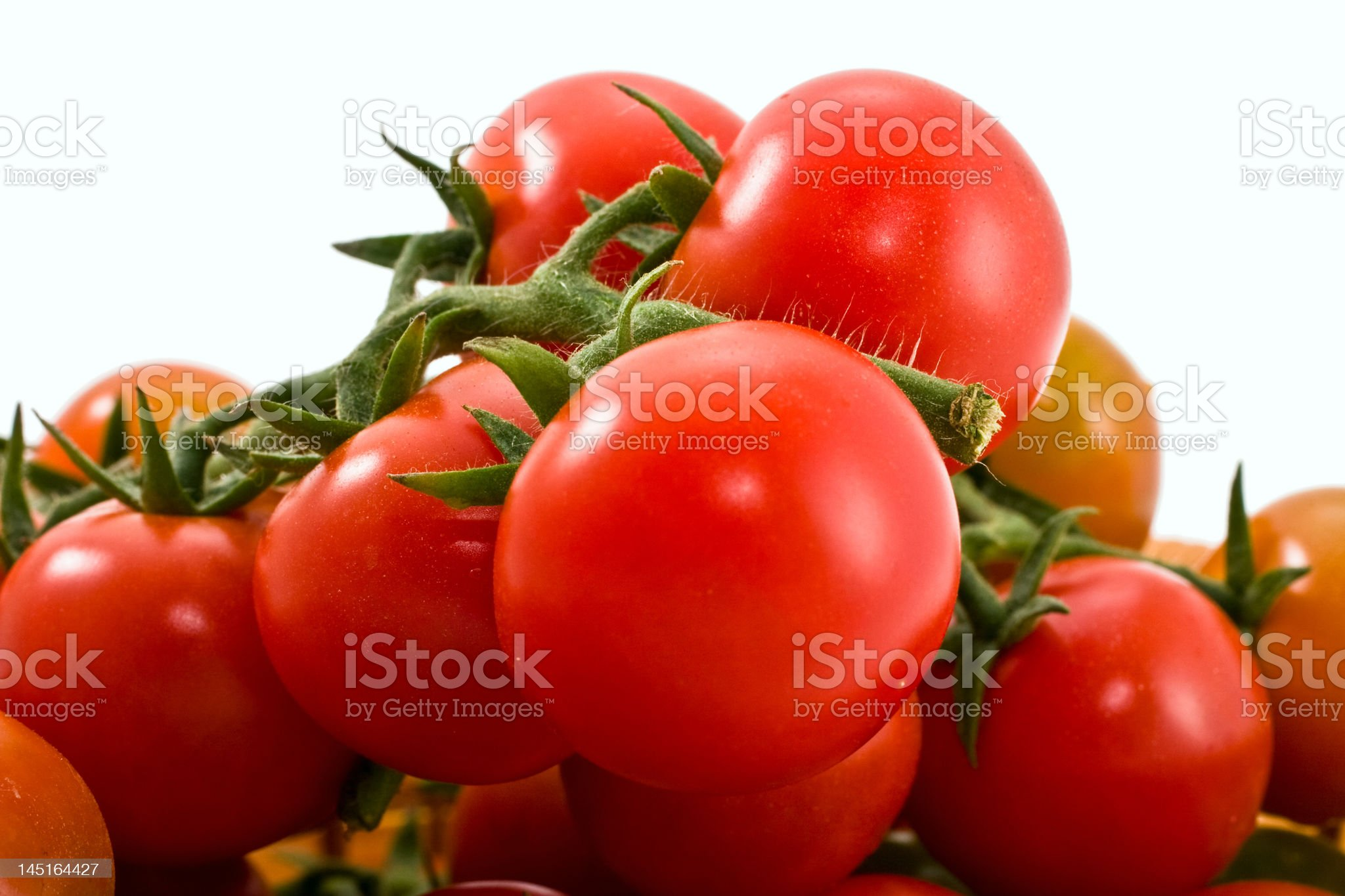 Branch of tomatoes royalty-free stock photo