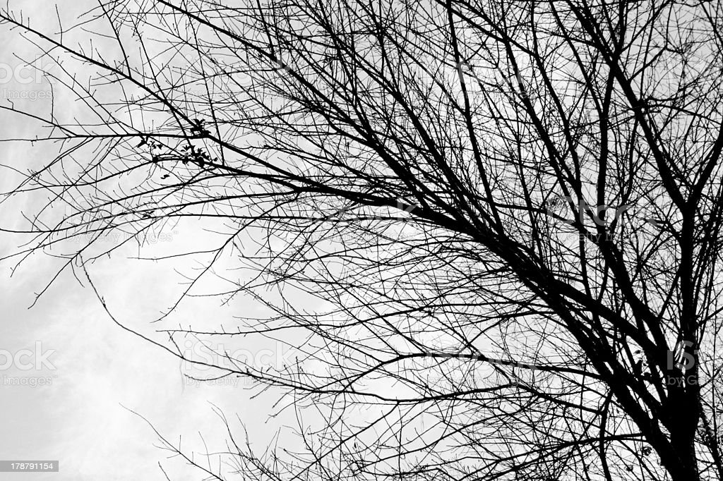 Branch of tree in black and white royalty-free stock photo