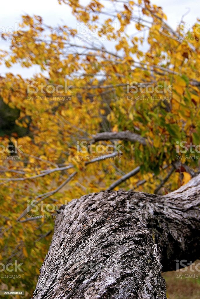 Branch of Yellow royalty-free stock photo
