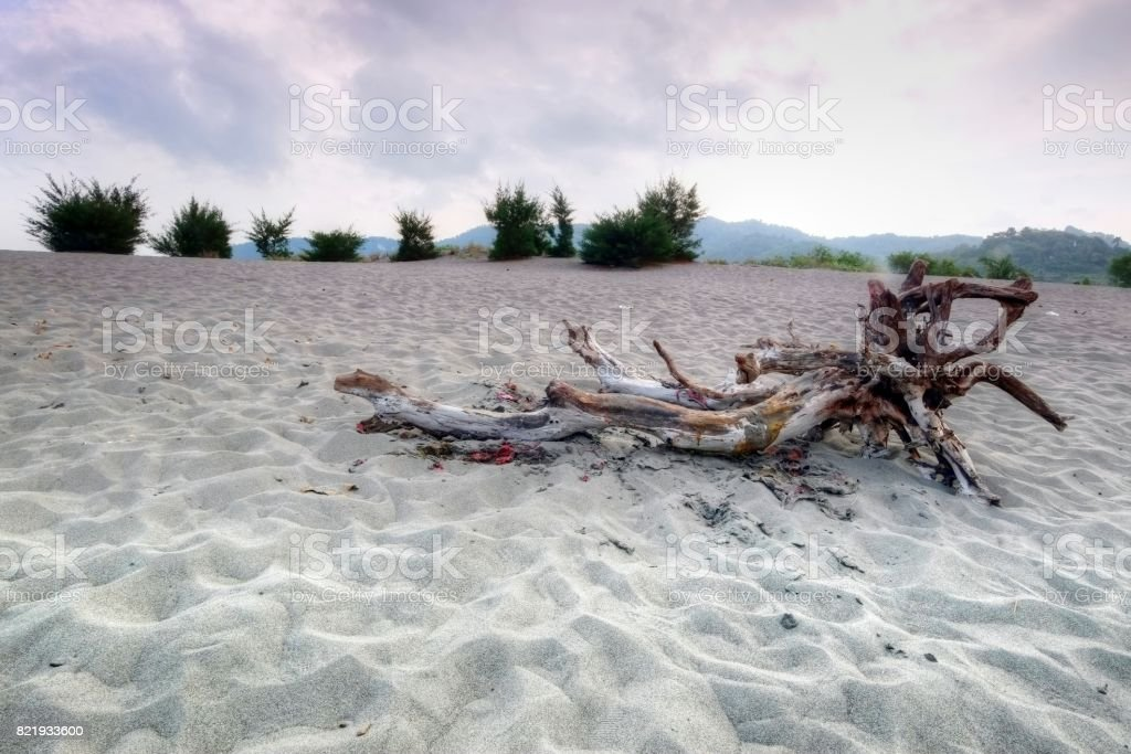Branch on the sand stock photo