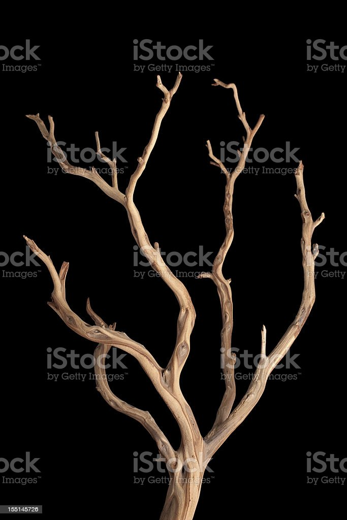 branch stock photo