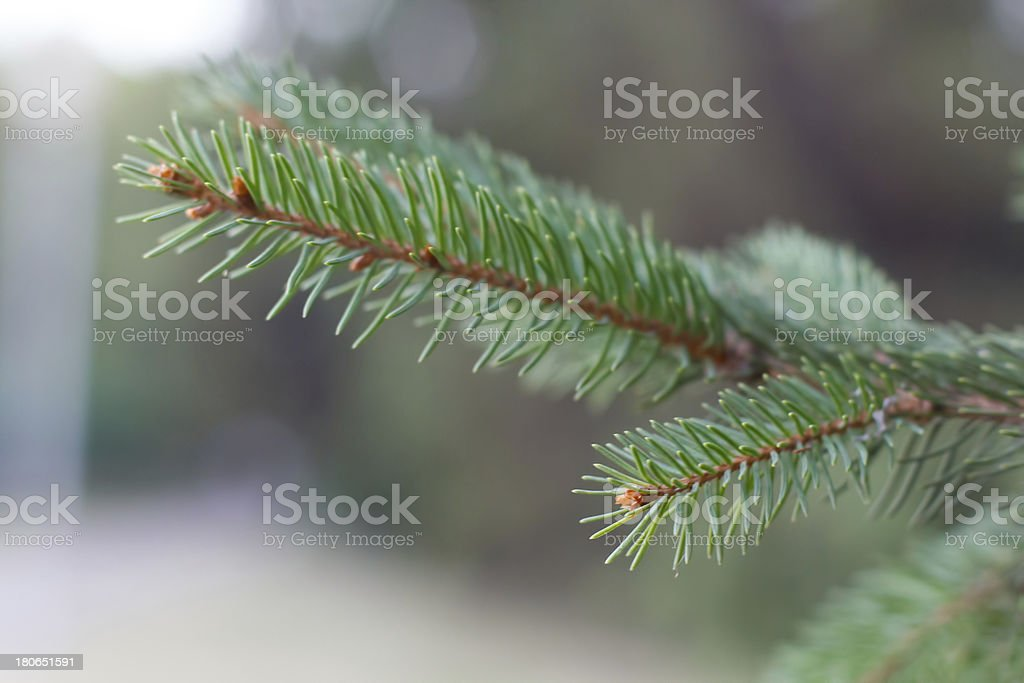 branch royalty-free stock photo