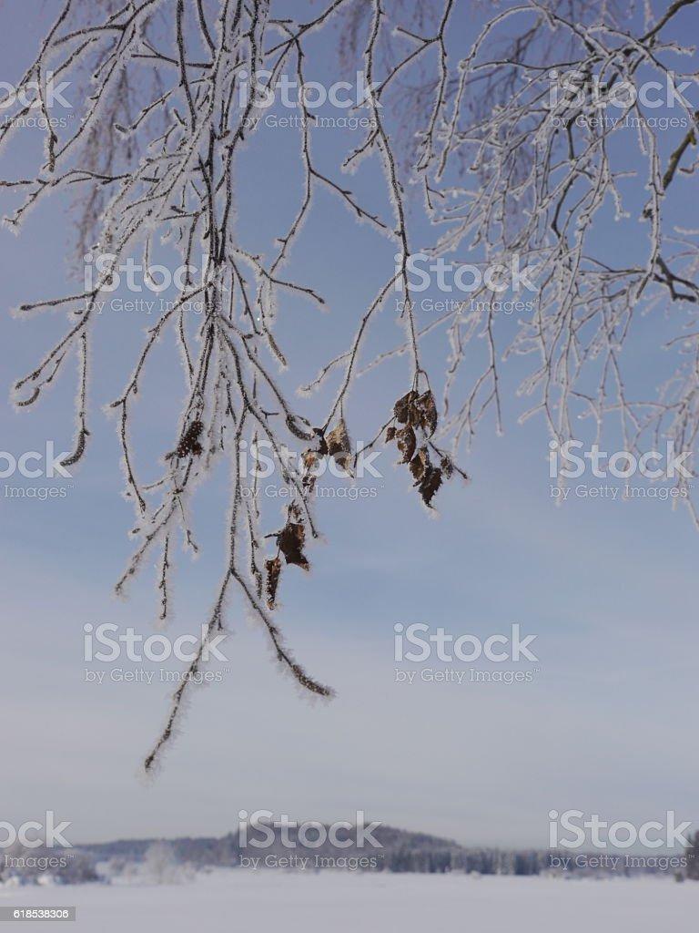 Branch stock photo