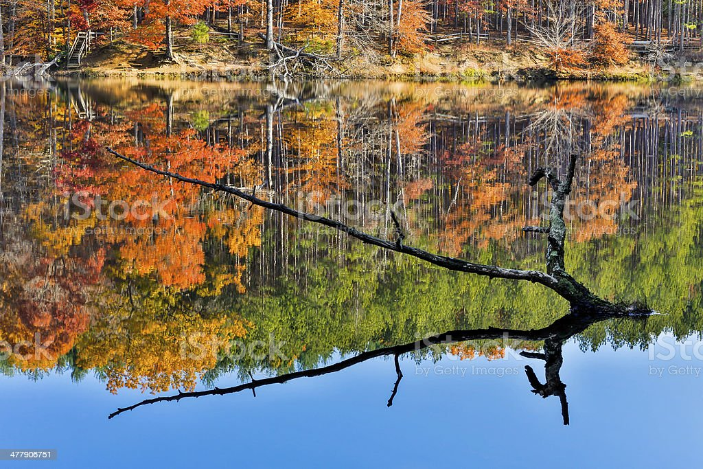 Branch Protrudes from Autumn Lake stock photo