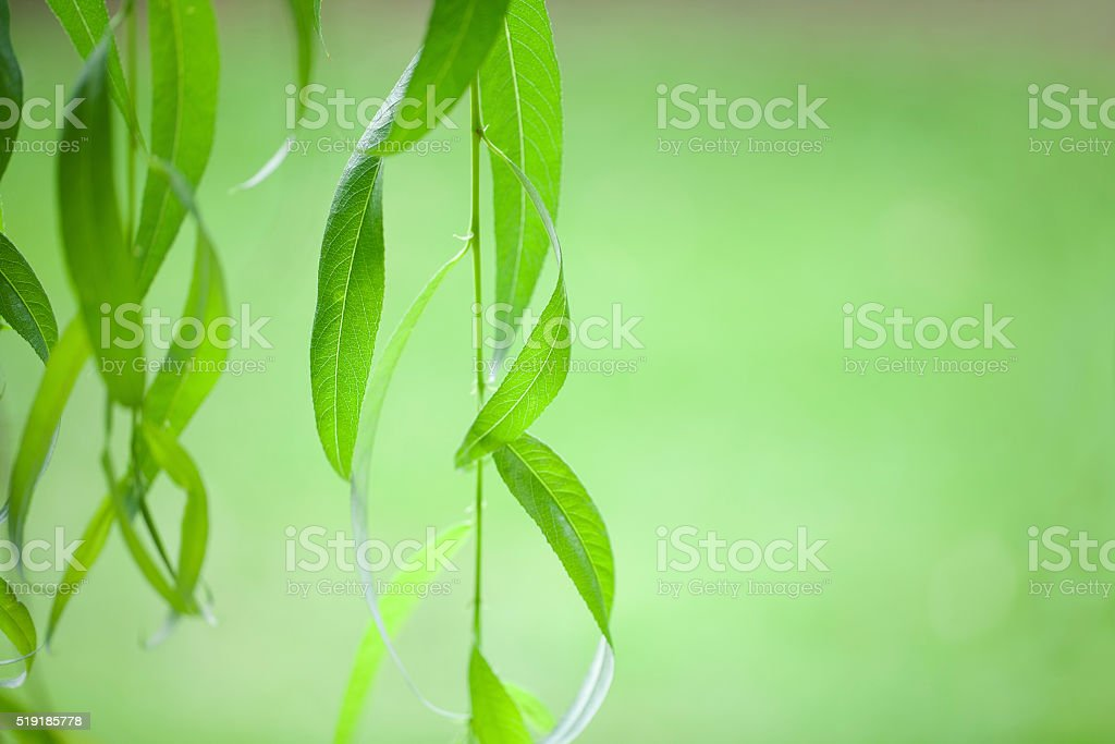 branch Rakita presented in soft background stock photo