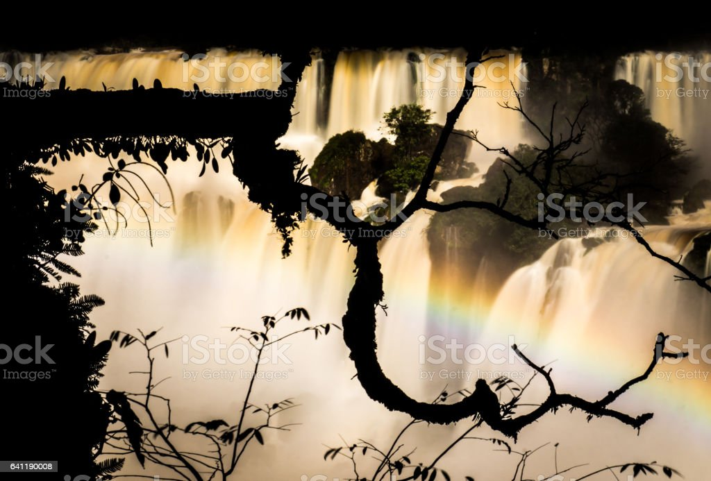 Branch silhouette at Iguazu Falls, Argentina stock photo