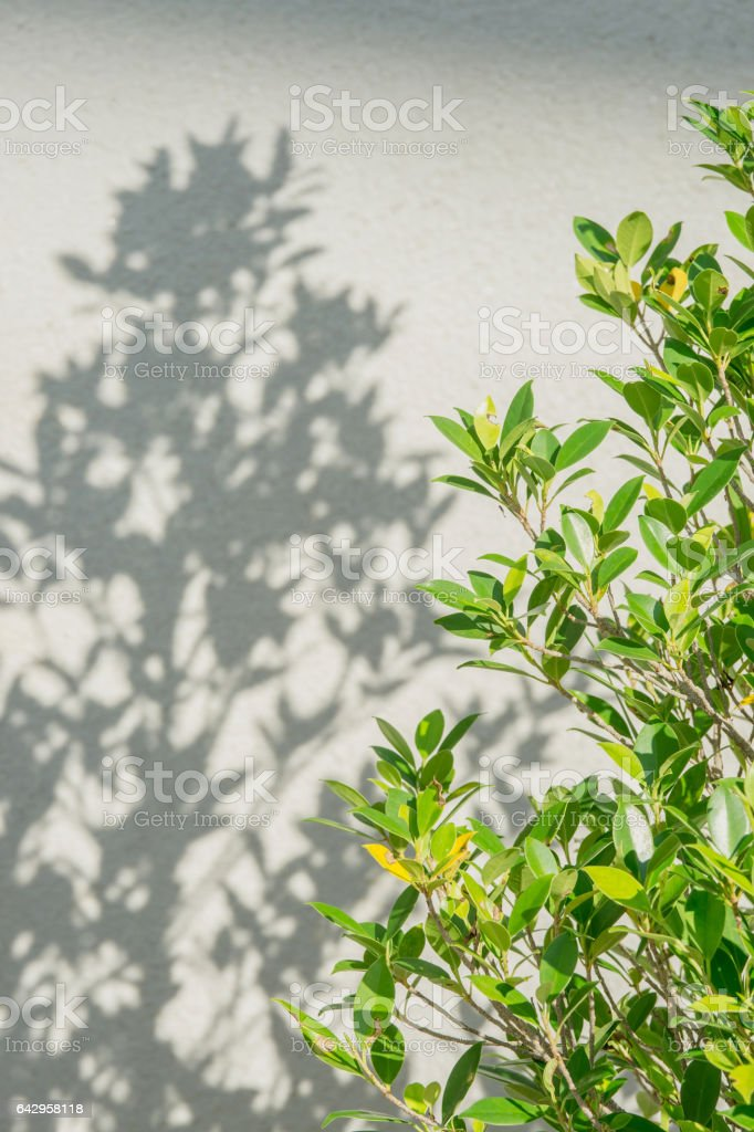 branch tree and shadows leaf on a gray wall stock photo