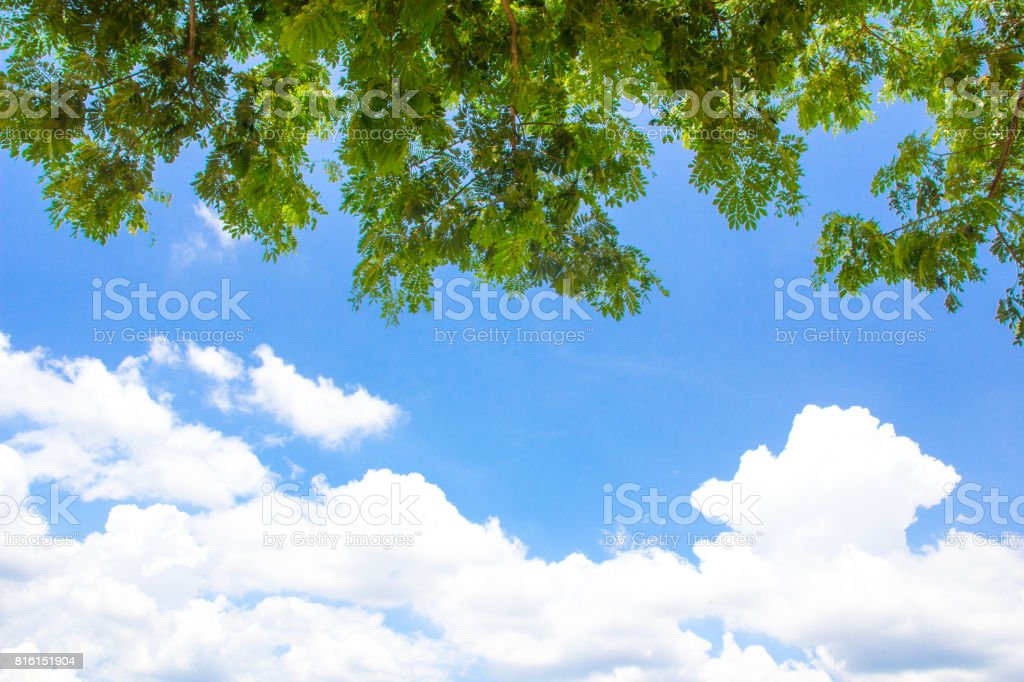 branch tree with bluesky background stock photo