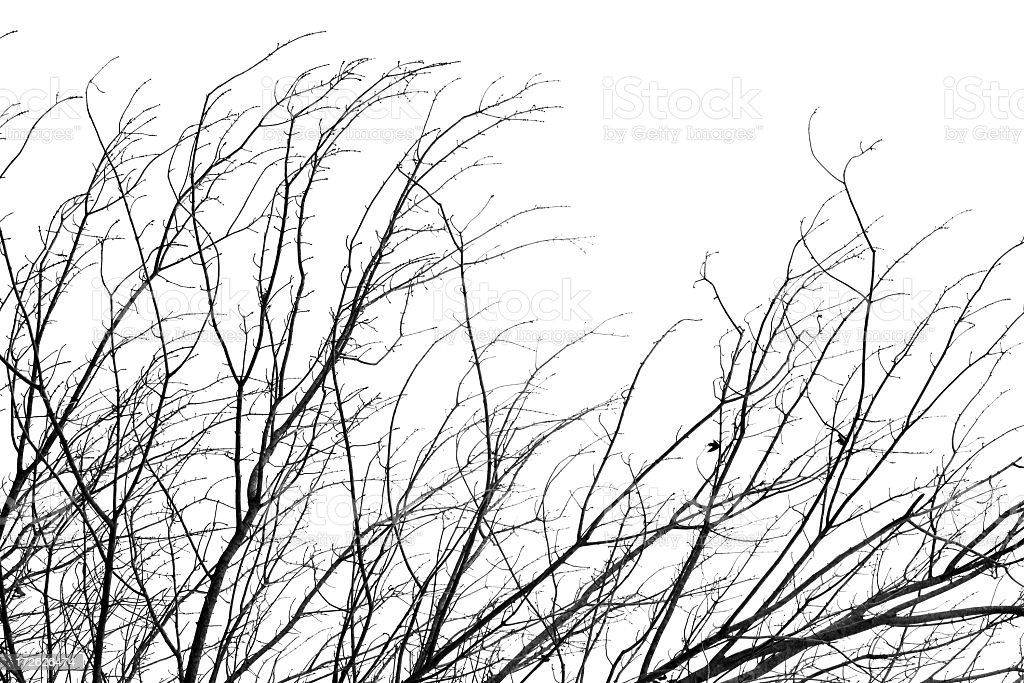 Branch Veins royalty-free stock photo