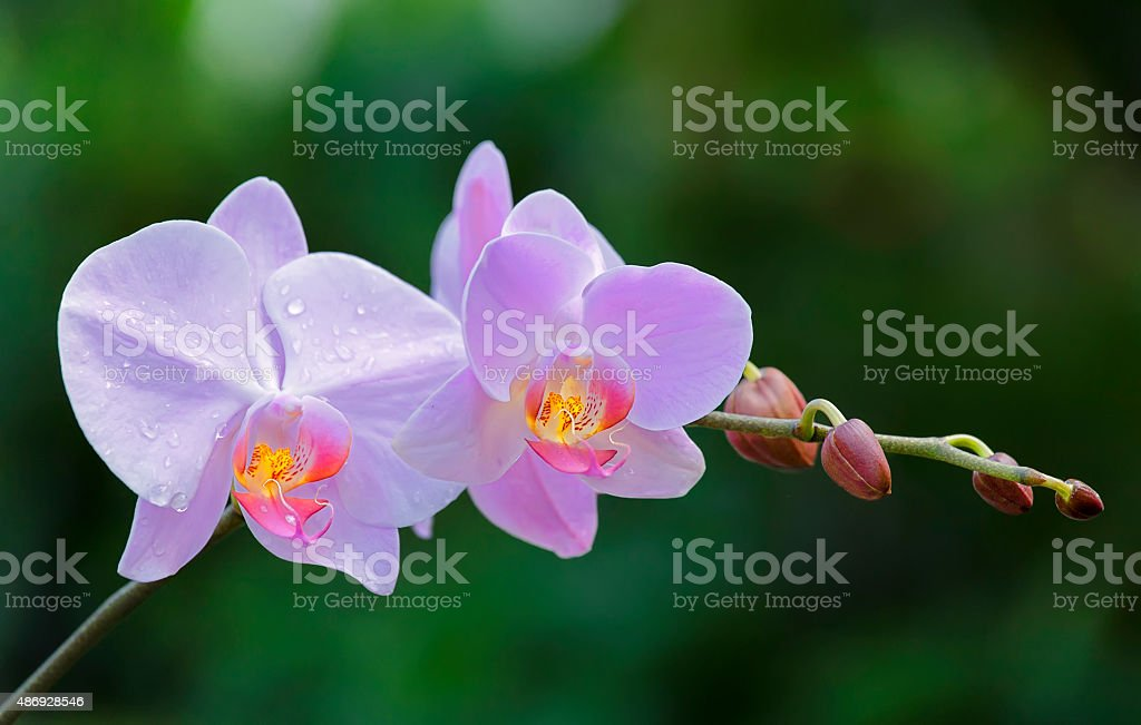 Branch wild orchids shimmering in the wind stock photo