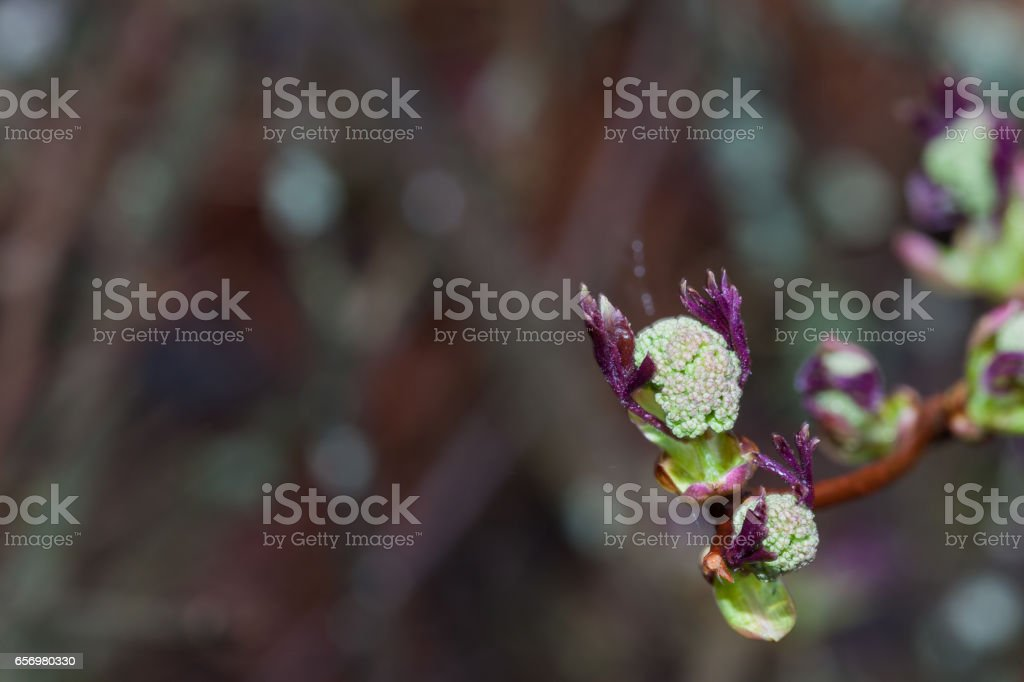 Branch with blossoming leaves. stock photo