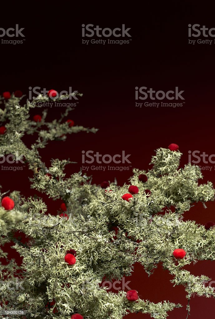 Branch with lichen and red pompons stock photo