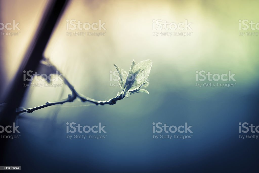 Branch with new leaves royalty-free stock photo