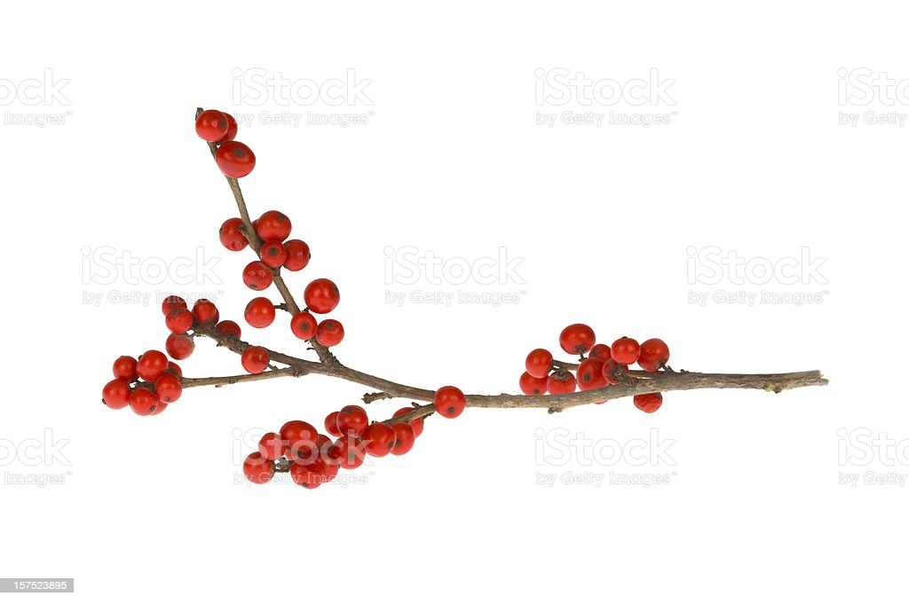 Branch with red berries stock photo