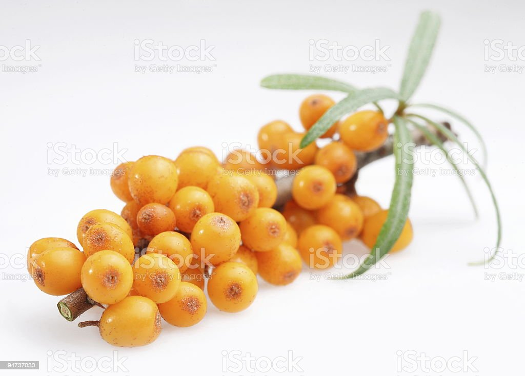 A branch with small orange, ball shaped sprouts on it stock photo