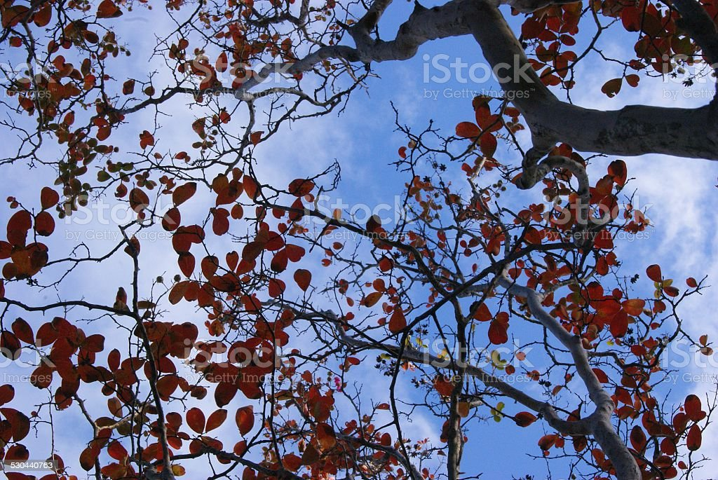 Branched View royalty-free stock photo