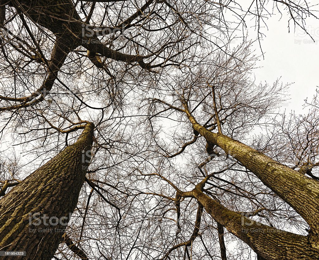 branches and twigs from the bottom without leaves royalty-free stock photo