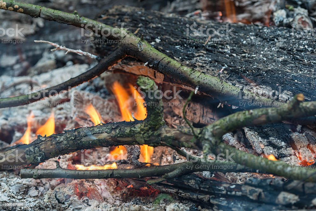 Branches and wood in the fire close up stock photo