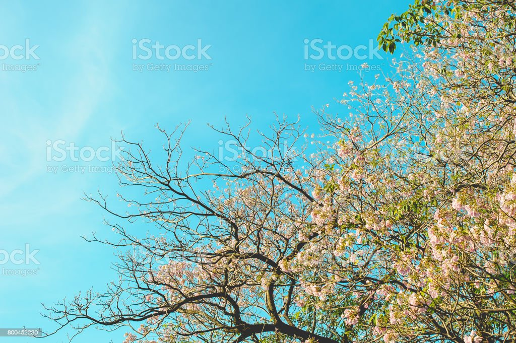 Branches are splendidly branched stock photo