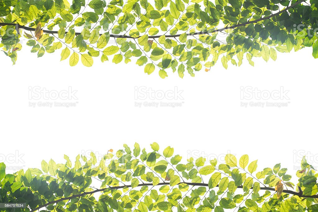 branches background stock photo