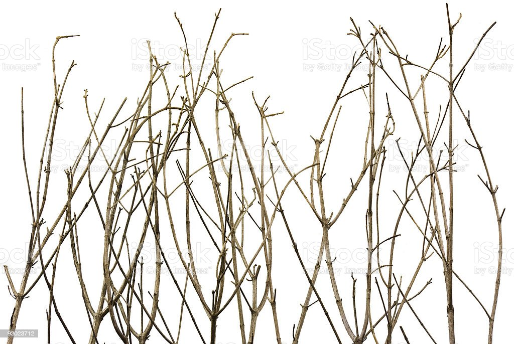 Branches Background royalty-free stock photo