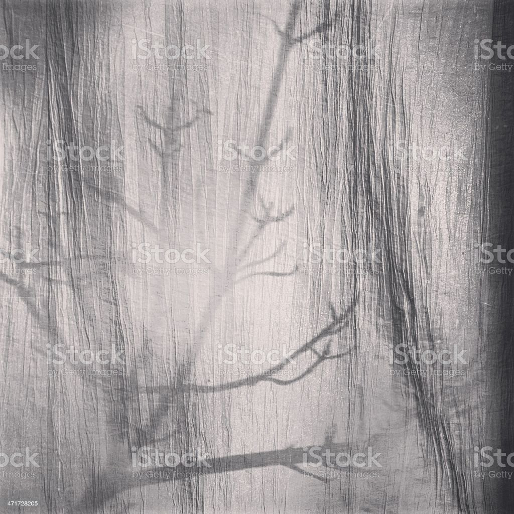 Branches Behind Curtain stock photo