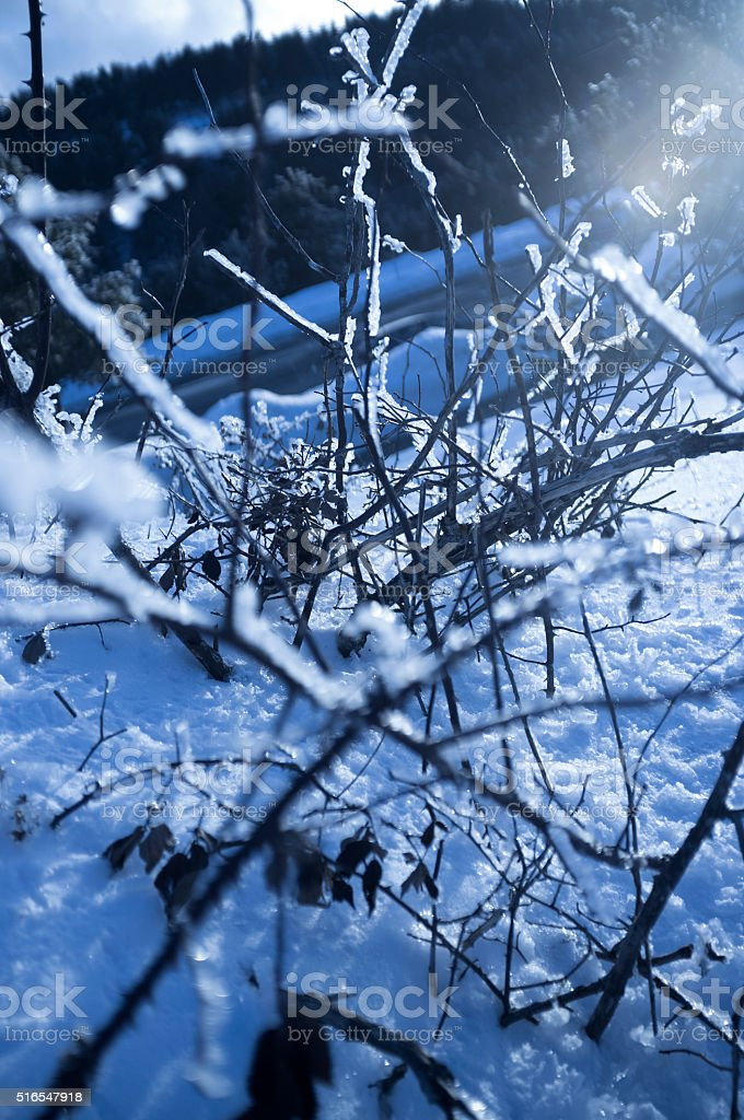 Branches covered by ice with sun effect stock photo