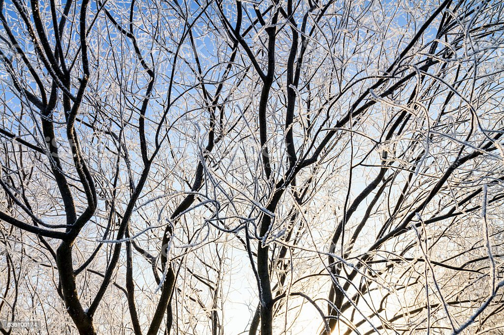 branches covered with frost at sunrise stock photo