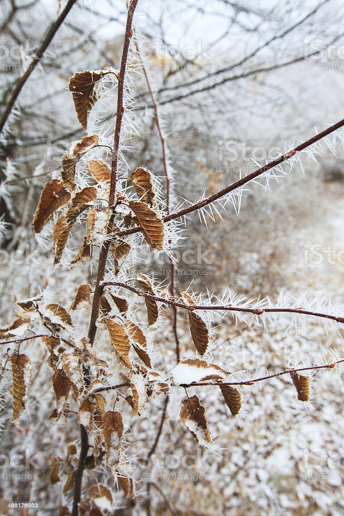 branches covered with hoarfrost royalty-free stock photo