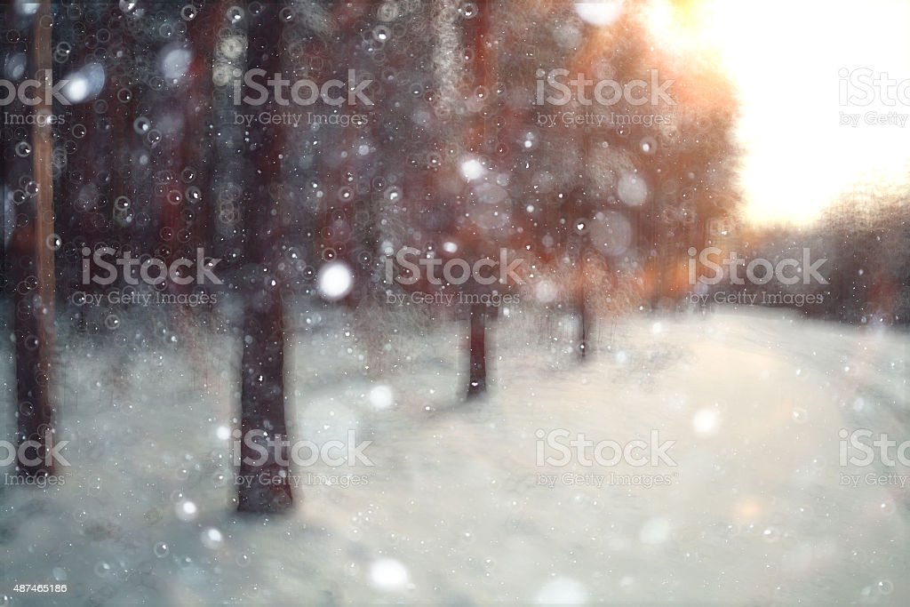 branches covered with snow winter snowfall background stock photo