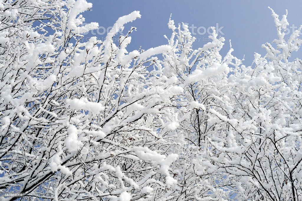 Branches in hoarfrost royalty-free stock photo