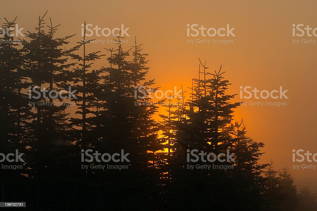 branches in the morning sun royalty-free stock photo