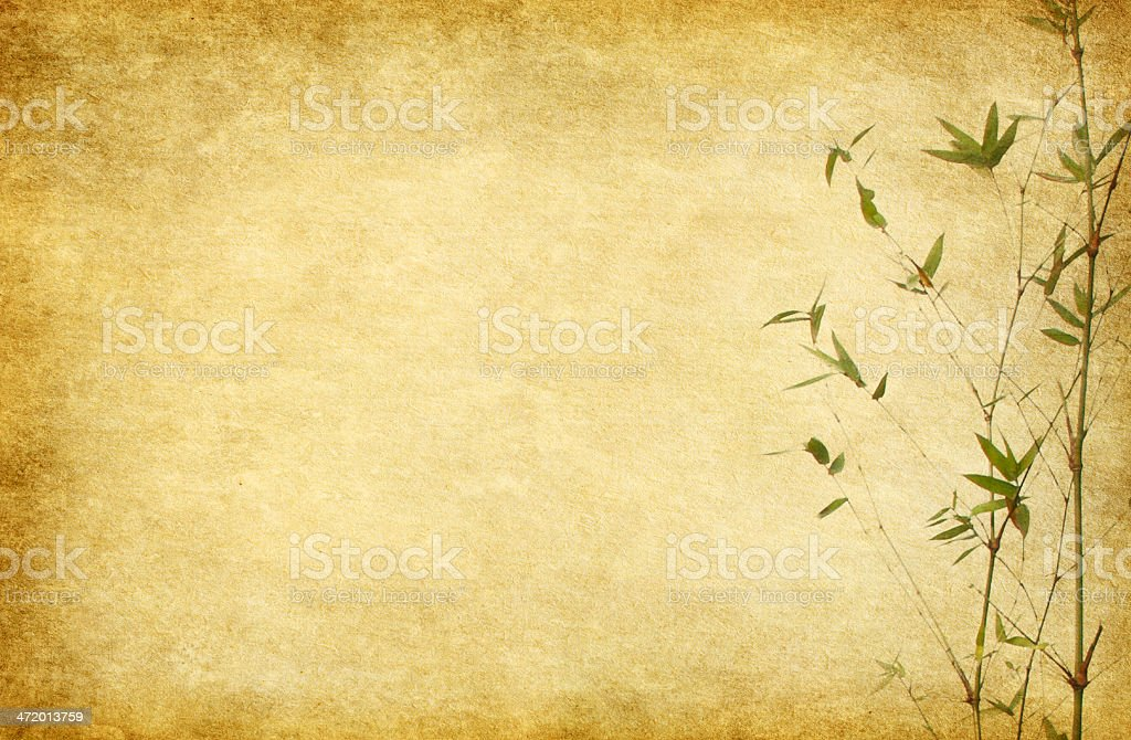 Branches of a bamboo  on  paper background. stock photo
