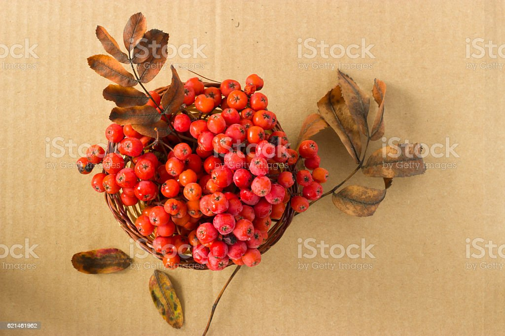 Branches of a mountain ash in the basket. stock photo