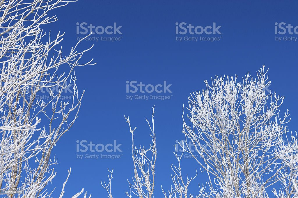 Branches of a snow winter tree royalty-free stock photo