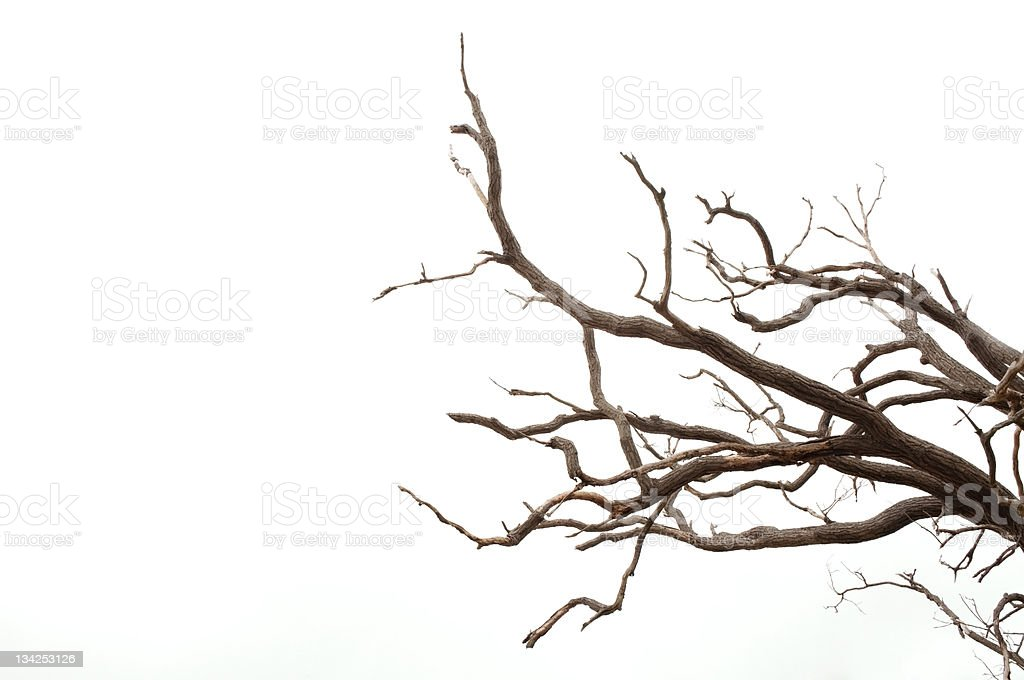Branches of a Tree royalty-free stock photo
