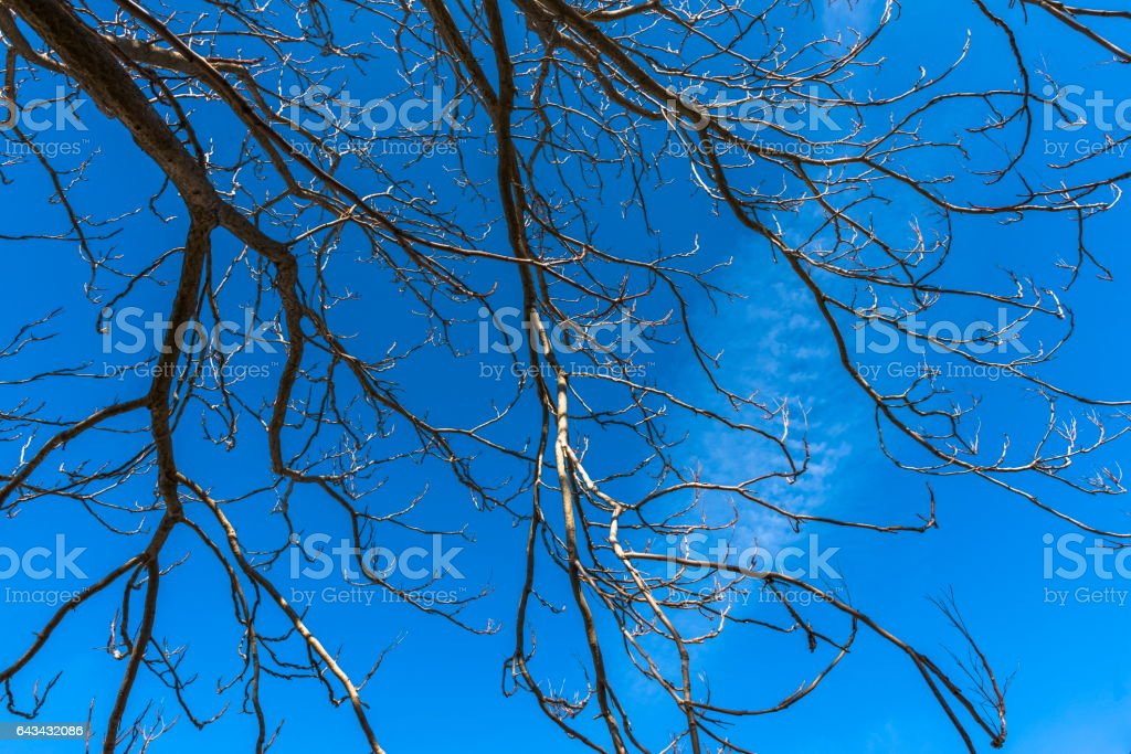 Branches of a winter tree stock photo