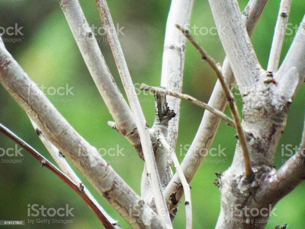 Les Branches d'un jeune arbre photo libre de droits