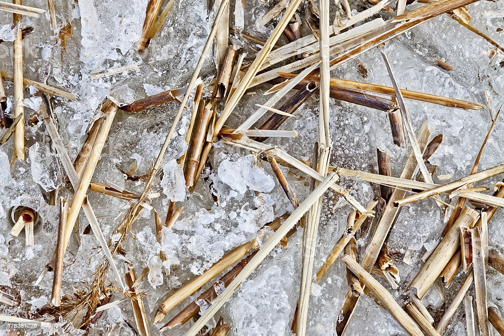 Branches of reeds royalty-free stock photo