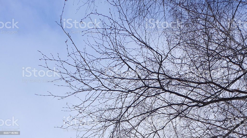 branches of tree in the sky stock photo
