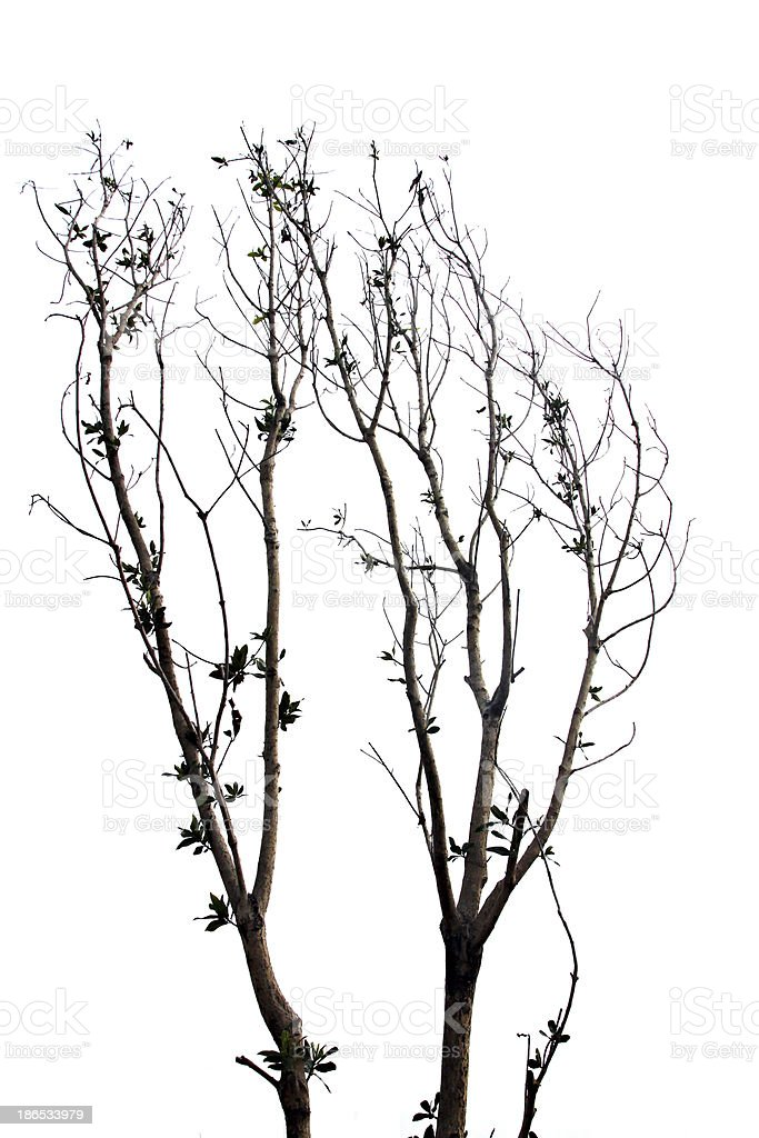 Branches of trees and leaves. royalty-free stock photo