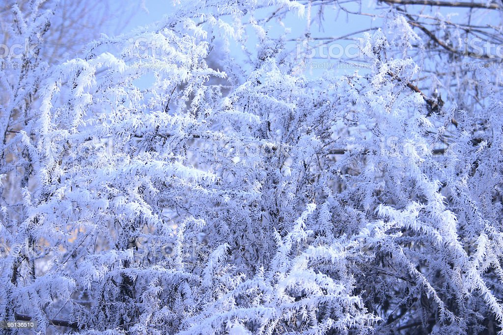 Gałęzie drzewa pokryte hoarfrost w zimowe niebo zbiór zdjęć royalty-free