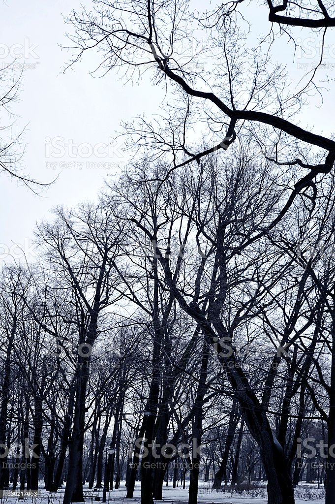 branches of trees on the background of a winter sky stock photo