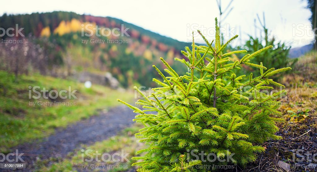 Branches of young trees. stock photo